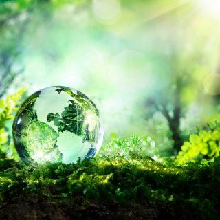 Lindsay Dynan Environmental Services